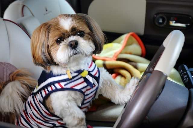 運転する犬のイメージ