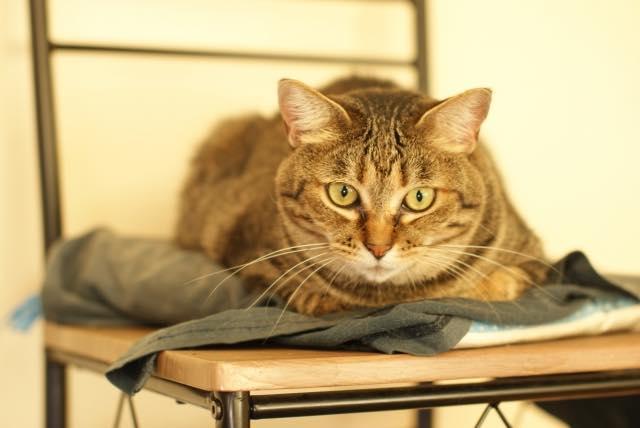 老猫のイメージ