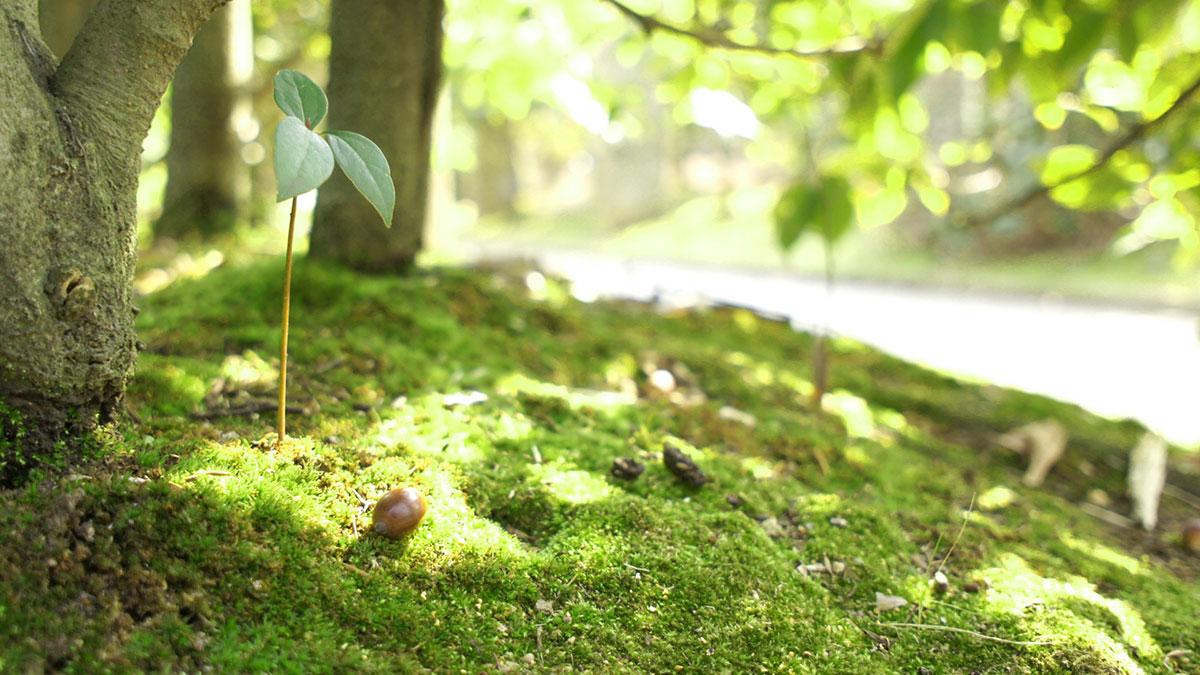 木をお墓に!「樹木葬」の種類と費用