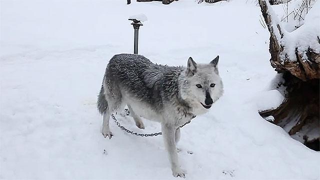 alaska-rescue