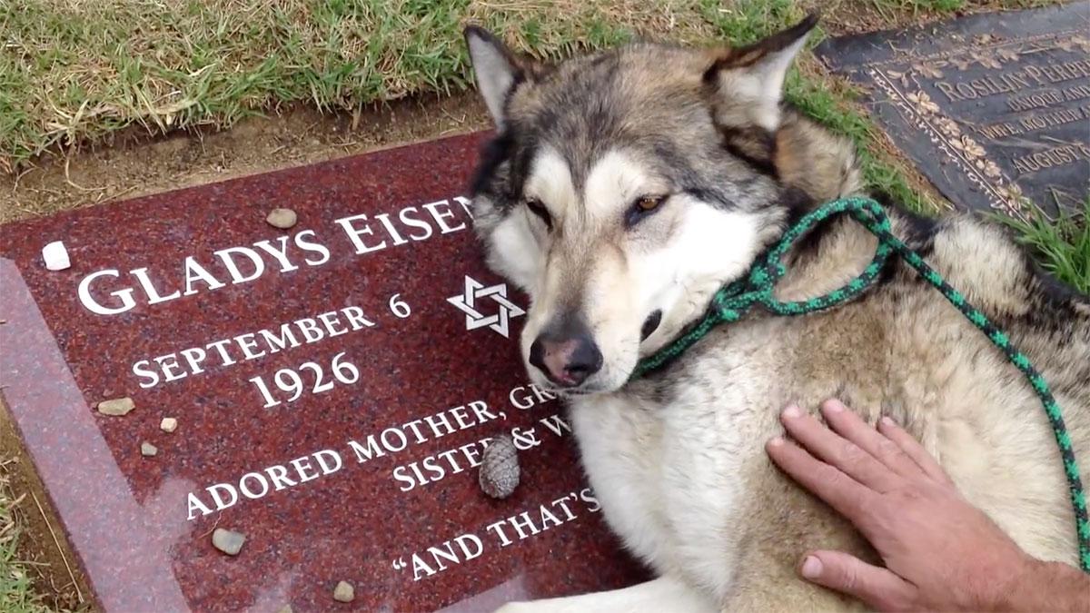 【感動】おばあちゃんの墓で泣く犬の裏話がスゴイ