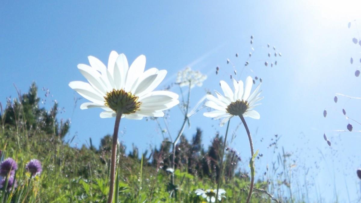 葬儀に関係する花を知ろう「供花・枕花・一本花・花輪・献花」