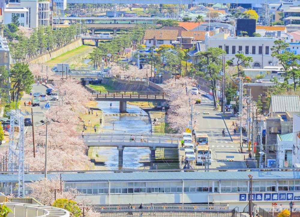 芦屋市 桜並木