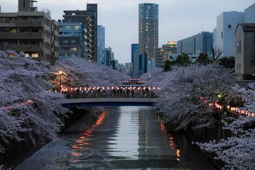 目黒区 桜まつり